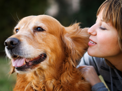 The basics of pet insurance Cover Art