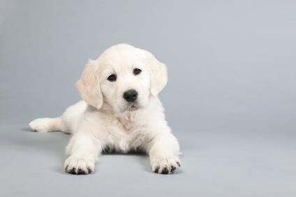 SCAM GRAM: Pay-by-the-month puppies? What's up with that?